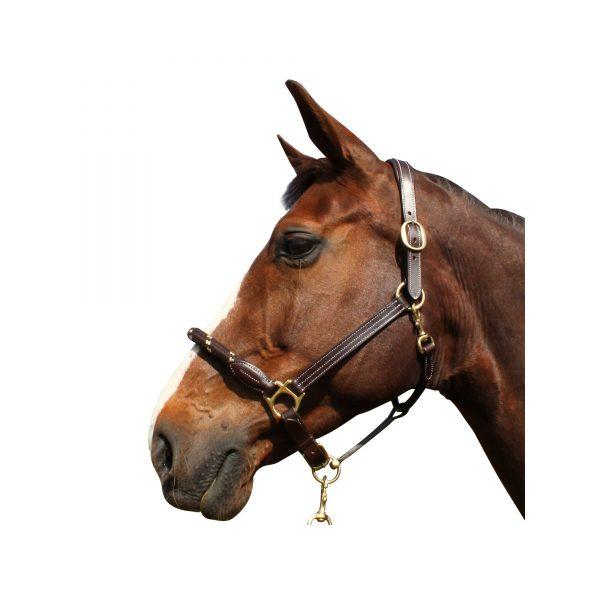 licol pour cheval en cuir et corde couleur marron et marron de marque canter