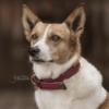 collier pour chien nylon tresse kentucky bordeaux