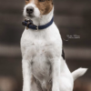 collier pour chien nylon tresse kentucky marine