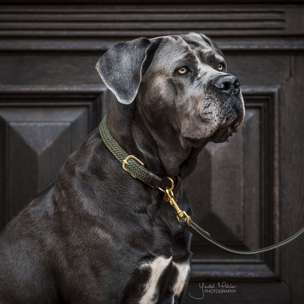 collier pour chien nylon tresse kentucky olive
