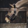 licol de transport pour cheval en mouton kentucky marron
