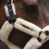 licol de transport pour cheval en mouton kentucky naturel