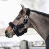 licol de transport pour cheval en mouton kentucky noir