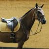 Tapis cheval selle velvet jumping Kentucky moutarde